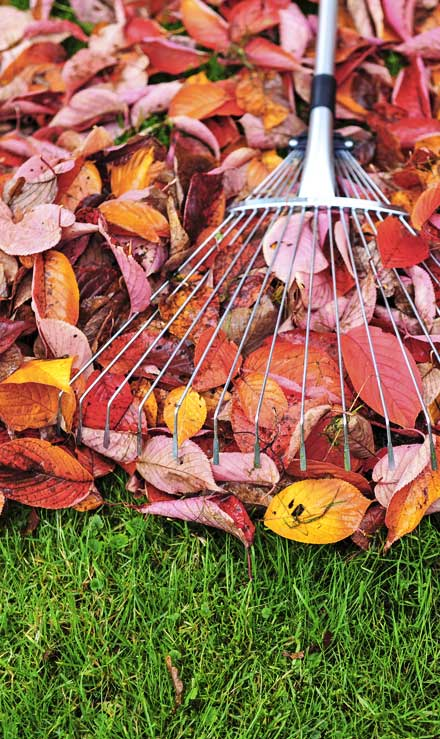 Brothers Lawn Service Fall Clean Up